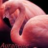 Profil de auranette