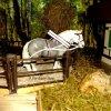 Ever-Beauty-Horse