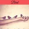 AS-Bohemian-Bird