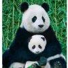 panda0705