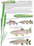 Fichier PDF Bulletin D INFORMATION des pêcheurs de l'Aisne N 35.pdf