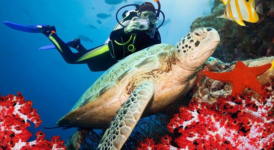 Baptême de Plongée en Guadeloupe pour les plongeurs débutants - DESHAIES - BOUILLANTE