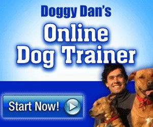Learn How To Leash Training Puppy