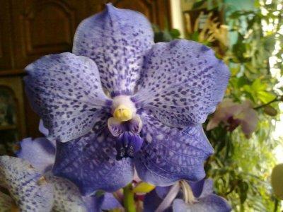 paradis des orchid�es