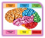 Dementia Education