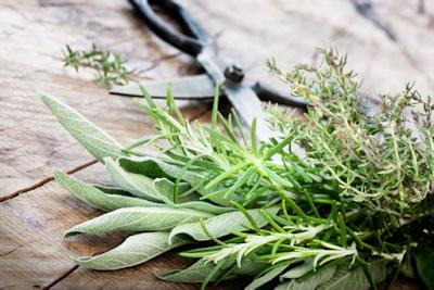 أفضل 7 أعشاب للحصول على بشرة صحية   شركة خمس خمسات للعناية بالاسرة