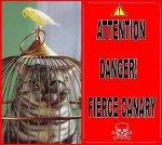 DANGER: CANARY FREEDOM - ★ GIALLI ♂♀ LUTINI ★