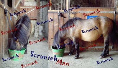 Joker : ScrontchMan