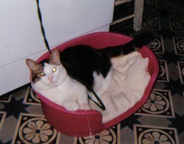 Coonak my cat (in true) (kiss my little love LOL ^ ^)