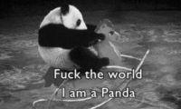 Darki-Panda