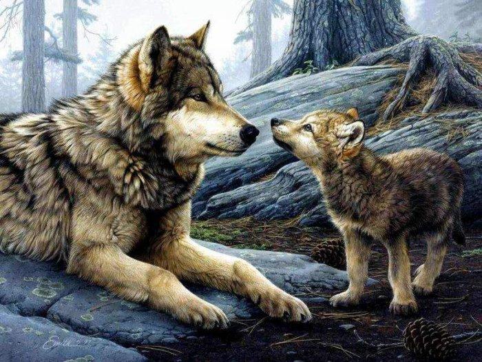 maman louve et bébé loup