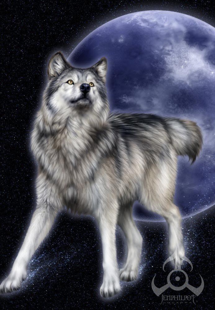 loup a la pleine lune!