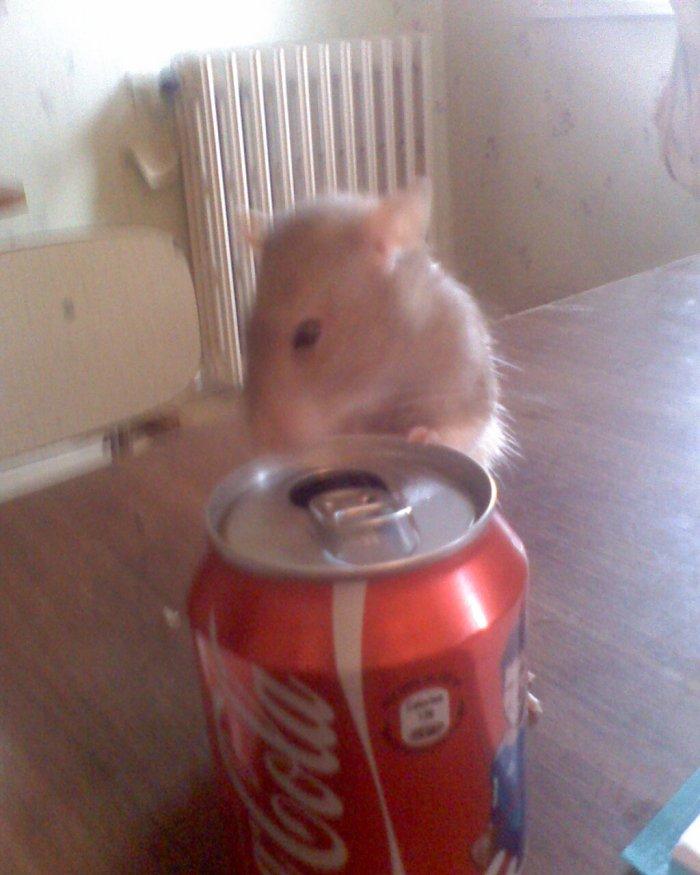 souvenir de Kiki notre rat!