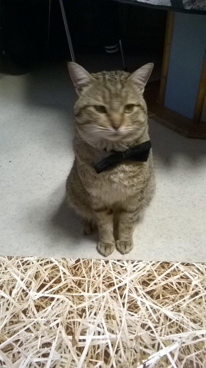 Kitty notre chat, c'était Noel 2015