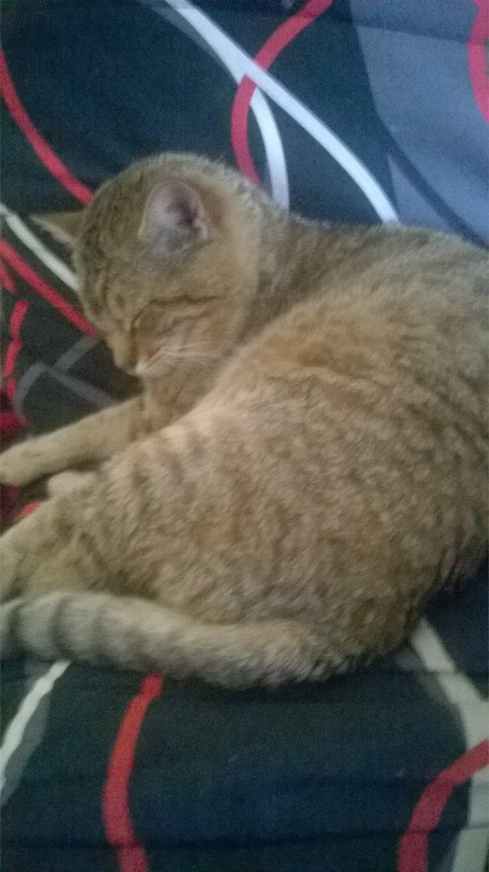 kitty, notre chat qui dort