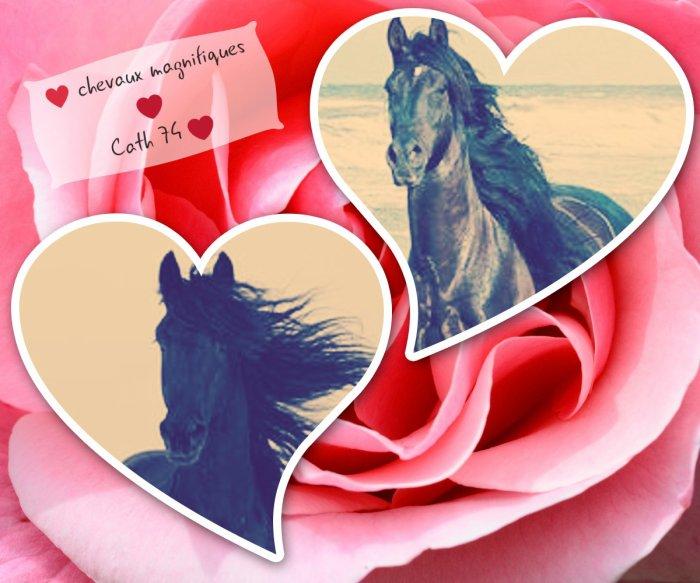 création : j'aime les chevaux!