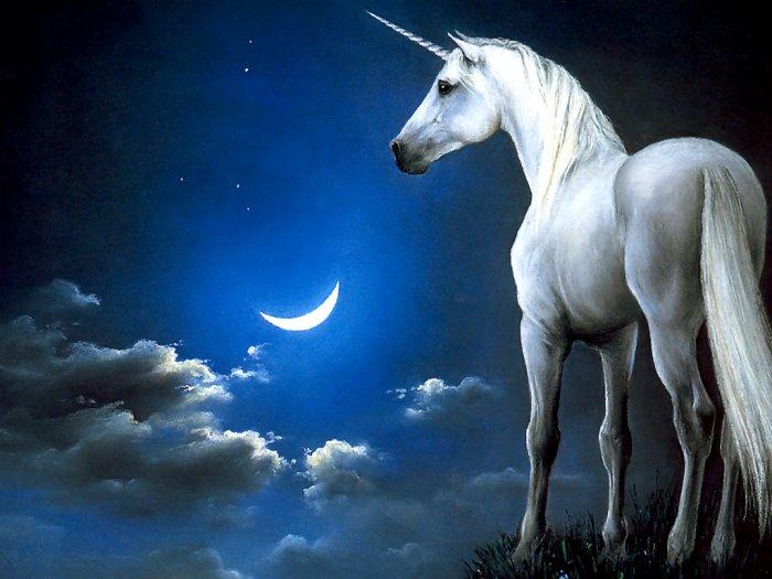 ma nuit magique!