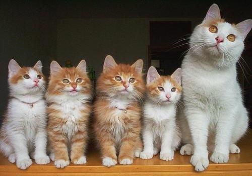 une belle famille!