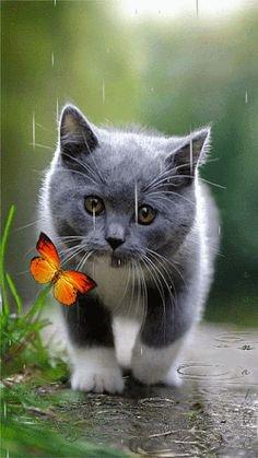 oh le joli papillon!