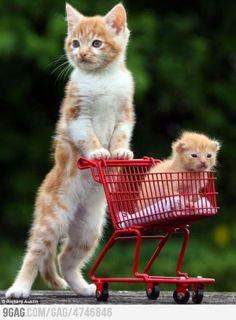 allez, les courses!!