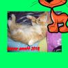 Profil de Bouha-Kharja