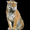 Profil de Tigresse5212