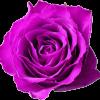 Rose-privee-com