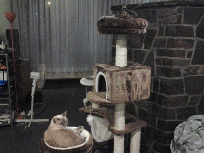 Petit arbre à chats et deux malheureux