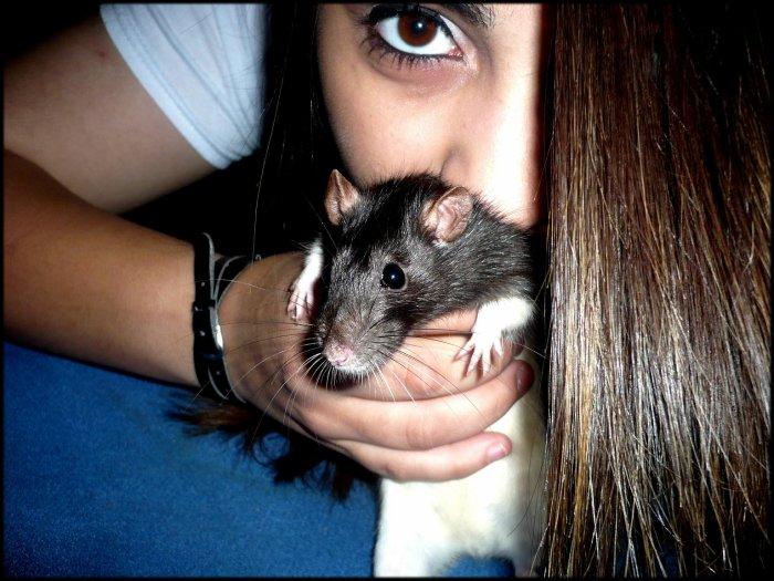 Ely' ; un amour de rat :p