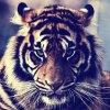 Profil de 0o-Tokio-Hotel-0o