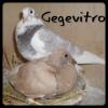 Gegevitro