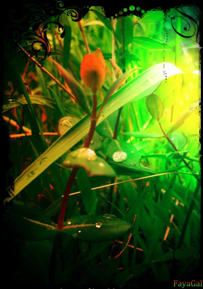 Fleur Goutte d'eau