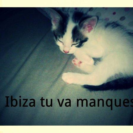 mon chat qui est mort