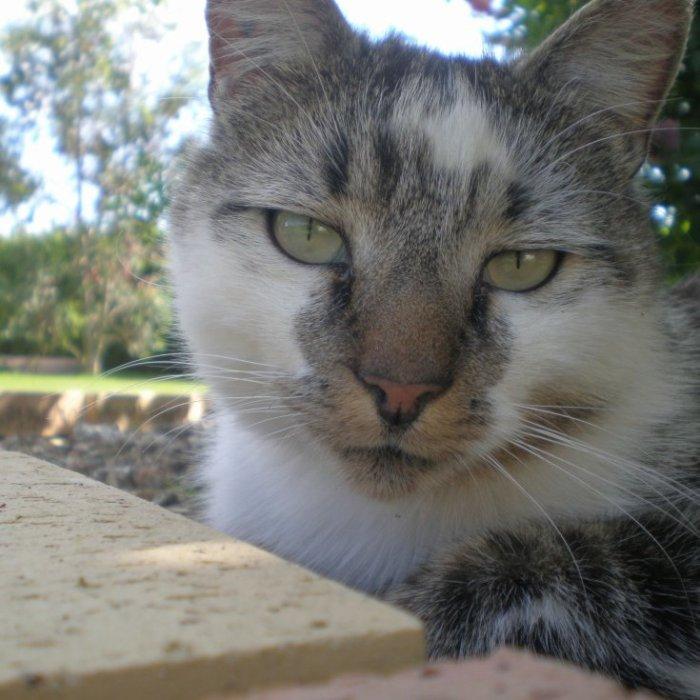 Mon chat rien qu'à moi!! ^^