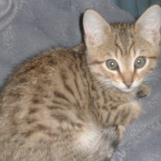 Notre 3ème chat, trop kiki!!! ^^