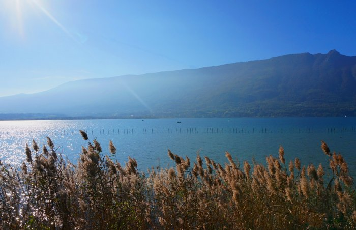 © IN Phragmitaie au lac du Bourget