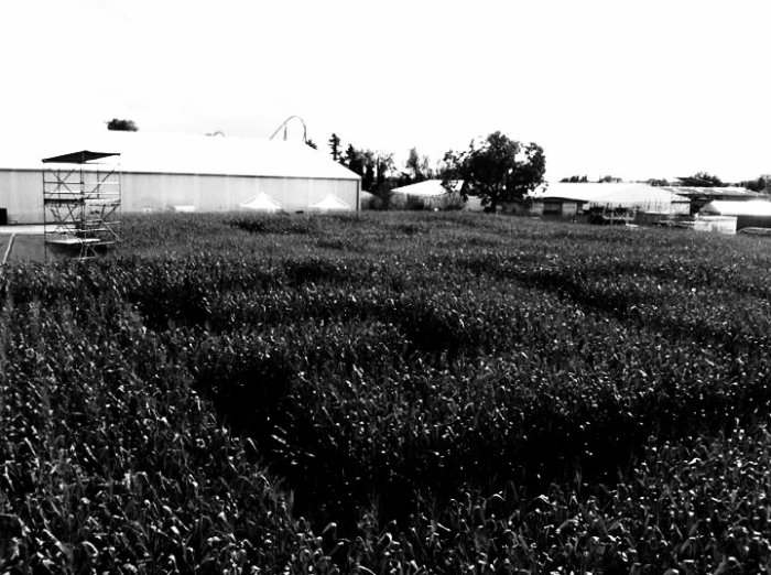Labyrinthe (photo fait par moi même)