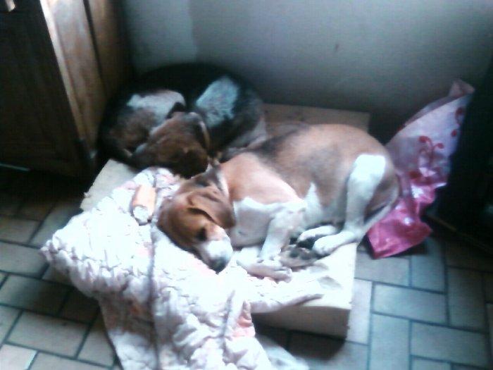 nika et cora dorment