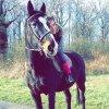Profil de LOove--chevaux