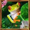 Profil de kevnelle-fleurs