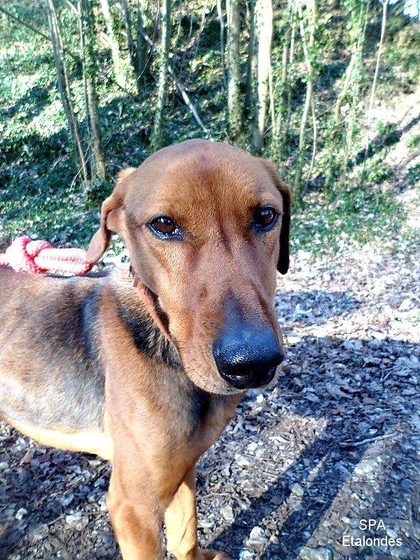 De http://photosofmydogs.skyrock.com