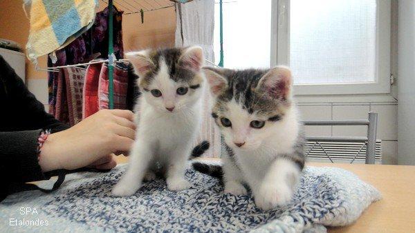 Jaïka et Jaïko