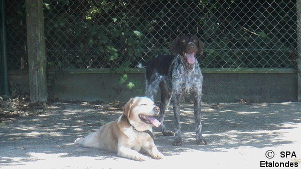 Balou et Gordon