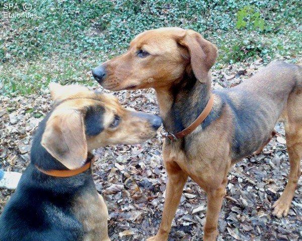 Eva et Courage ( De http://photosofmydogs.skyrock.com )