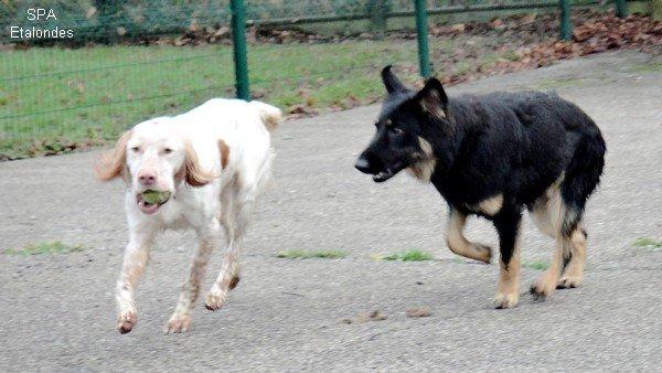 Dartagnan et Helena