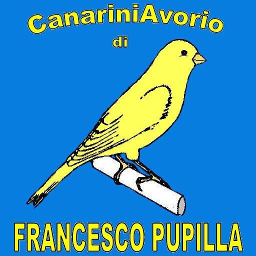 Franco Pupilla