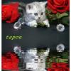 Profil de Tapou-Tricot