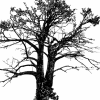 Profil de kemetofficiel