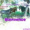 Profil de xx-blogchevaux-xx