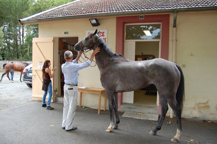 Services vétérinaire des courses Vichy